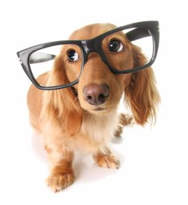 daschund_oversized_glasses